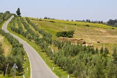 Olive Trees em Toscânia, Itália fotos de stock
