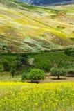 Olive Trees en Wildflowers Royalty-vrije Stock Foto's