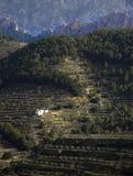 olive trees för hus Arkivbild