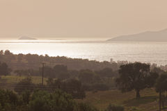 Olive Trees Farmland in Greece Royalty Free Stock Photography