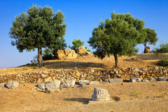 Olive trees growing in ruins of Sanctuary of Posei. Don, Poros, Greece Stock Photos