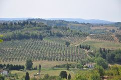Olive trees and hills Florence Tuscany stock photography