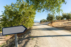 Olive trees on hillside above dirt road with sign Royalty Free Stock Image