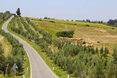 Olive Trees i Tuscany, Italien arkivfoton