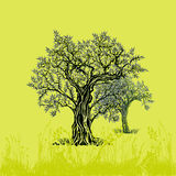 Olive trees royalty free illustration