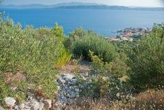 Olive Trees - Kroatien Stockbilder