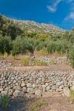 Olive Trees - Kroatien Stockfotos
