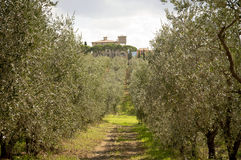 Olive Trees With Mediterranean House Royalty-vrije Stock Afbeelding