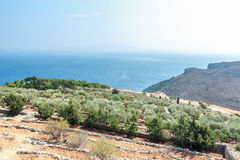 Olive trees and Mediterranean villa on Greek Stock Photography