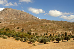 Olive Trees and Mountains. Crete, Greece Stock Photos