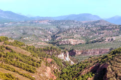 Olive trees in the mountains of Granada. In Spain on a sunny day. You can see some trees royalty free stock images