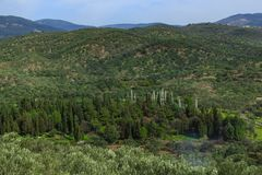 Olive trees and mountains. royalty free stock images