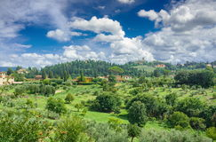 Olive trees near Florence Royalty Free Stock Image