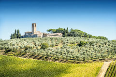 Olive trees with old building Stock Photo