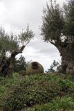Olive trees and old vases in garden Royalty Free Stock Images