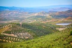 Olive Trees Plantation härligt Andalusian landskap Arkivbild