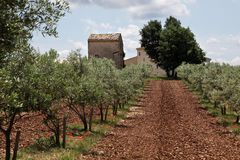 Olive trees in Provence Royalty Free Stock Photos