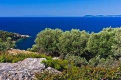 Olive trees and rocky sea coast near Toroni at Sithonia Stock Images