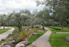 Olive trees and sculptures in an exotic park. In high quality Royalty Free Stock Photos
