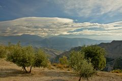 Olive trees with Sierre Nevada mountain landscape behind under a blue sky with soft clouds. Andalusia, Spain Royalty Free Stock Photo