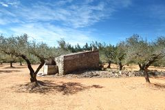 Olive Trees in spain Stock Photography