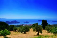 Olive trees view with seaside and ocean and sky on horizont, Skiathos landscape. Olive trees view with seae and ocean and sky on horizont, Skiathos landscape Stock Photography