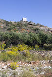 Olive trees and yellow flowers near stoupa in mani on greek pelo Royalty Free Stock Images