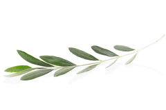 Olive twig Stock Photo