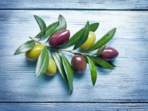 Olive twig. Royalty Free Stock Photos