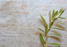 Olive twig Royalty Free Stock Images