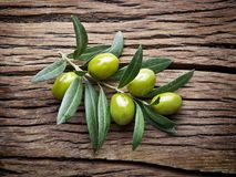 Olive twig. Royalty Free Stock Images
