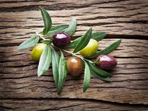 Olive twig on wooden table. Stock Photography