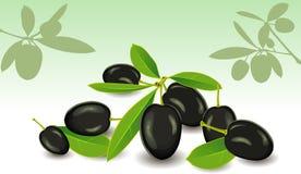 Olive, un vettore Immagine Stock