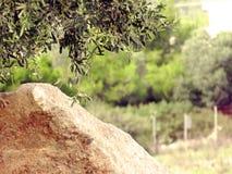 Olive und Felsen Stockfotografie