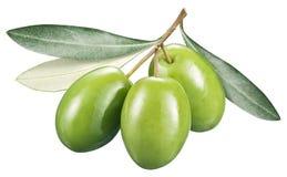 Olive verdi con le foglie su un fondo bianco immagine stock libera da diritti