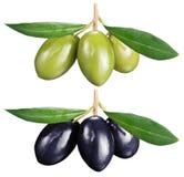 Olive verdi e nere con le foglie su un fondo bianco Immagini Stock Libere da Diritti