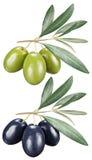 Olive verdi e nere con le foglie su un fondo bianco Immagine Stock