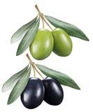 Olive verdi e nere con le foglie su un fondo bianco fotografie stock libere da diritti