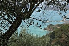 Olive verl?sst auf dem Hintergrund der Klippe lizenzfreie stockfotos