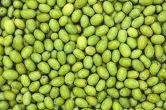 Olive verte moissonnée fraîche pour la texture de modèle de production de pétrole photographie stock