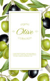 Olive vertical banner Stock Photography