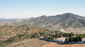 Olive with white houses. Olive grove located in the Sierra de Cadiz in Spain, in the background are the mountains, you can see some trees in the mountain and a royalty free stock image