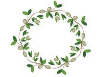 Olive wreath Stock Image
