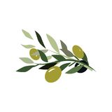 OliveBrunchSetdigital 免版税库存图片