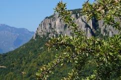 Oliveira nas montanhas perto dos meteoros Foto de Stock Royalty Free