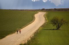 Oliveira no campo e bicicletas na rota Fotos de Stock Royalty Free