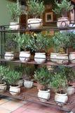 Oliveiras em uns potenciômetros de argila no mercado em Menton, França Fotografia de Stock Royalty Free