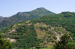 Oliveiras na Creta, Grécia fotos de stock royalty free