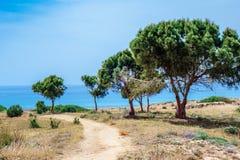 Oliveiras no parque arqueológico em Kato Paphos Fotos de Stock