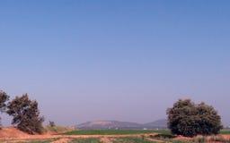 Oliveiras que olham os montes Imagens de Stock Royalty Free